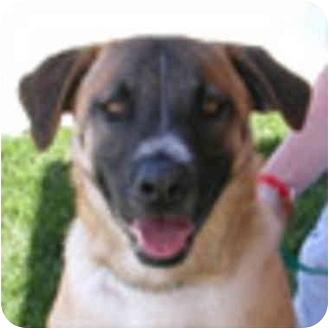German Shepherd Dog Mix Dog for adoption in Berkeley, California - Oliver