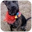 Photo 3 - Pit Bull Terrier Mix Dog for adoption in Huntington, New York - Bella