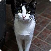 Adopt A Pet :: Icabod - St. Petersburg, FL