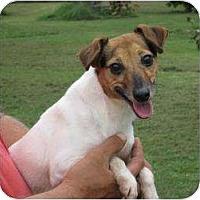 Adopt A Pet :: Vicky - Greenville, RI