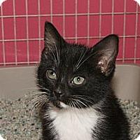 Adopt A Pet :: Matilda - Memphis, TN