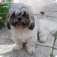 Adopt A Pet :: Yoko - Minneola, FL