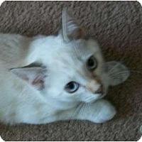 Adopt A Pet :: Snowy - lake elsinore, CA