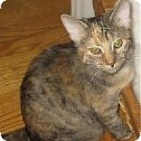 Adopt A Pet :: K-Marilyn5-Mary - Colorado Springs, CO