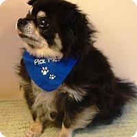 Adopt A Pet :: Pepe - Osseo, MN