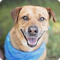 Adopt A Pet :: Tanner - Kingwood, TX