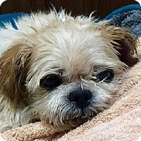 Adopt A Pet :: Sebastion - Port Washington, NY