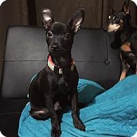 Adopt A Pet :: Wesley - Davie, FL