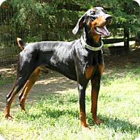 Adopt A Pet :: PRICE - Greensboro, NC