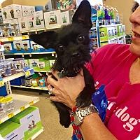 Adopt A Pet :: Ruby - Brea, CA