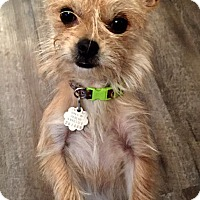 Adopt A Pet :: Sadie Grace - Hagerstown, MD