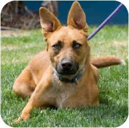 Shepherd (Unknown Type) Mix Dog for adoption in Rio Rancho, New Mexico - Lexi