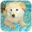 Photo 2 - Golden Retriever/Chow Chow Mix Puppy for adoption in Murphysboro, Illinois - Snorkle