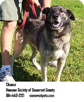 Husky Mix Dog for adoption in Somerset, Pennsylvania - Chance