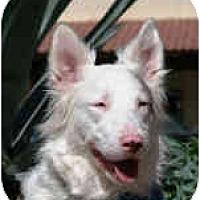 Adopt A Pet :: Buddy - Mesa, AZ