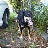 Adopt A Pet :: Madison - Miami Beach, FL