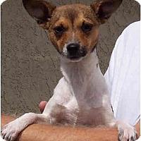 Adopt A Pet :: LARRY - Phoenix, AZ