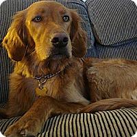 Adopt A Pet :: Rynen - URGENT FOSTER  NEEDED - Huntsville, ON