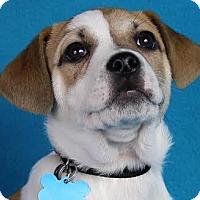 Adopt A Pet :: Ford - Minneapolis, MN