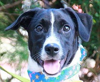 Bernese Mountain Dog Dog for adoption in San Francisco, California - Glen