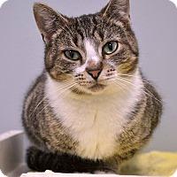 Adopt A Pet :: Mouse - Byron Center, MI