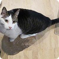 Adopt A Pet :: Louie - N. Billerica, MA