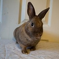 Other/Unknown Mix for adoption in Woburn, Massachusetts - Willow