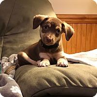 Adopt A Pet :: Mali - Middlesex, NJ