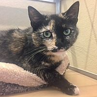 Adopt A Pet :: Polly - Wilmington, DE