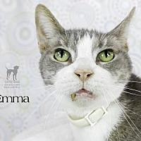 Adopt A Pet :: Emma - South Bend, IN