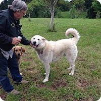 Adopt A Pet :: Buford - Salem, OR
