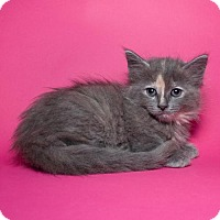 Adopt A Pet :: Lily - Jersey City, NJ