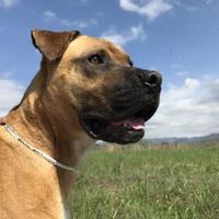 Adopt A Pet :: Milo - Marshall, NC