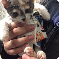 Adopt A Pet :: ZHOEY - Cliffside Park, NJ