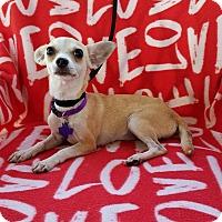 Adopt A Pet :: Kaydia - Houston, TX