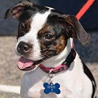 Adopt A Pet :: Evie - Lafayette, IN