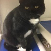 Adopt A Pet :: Ozzie - Potsdam, NY