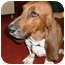 Photo 1 - Basset Hound Dog for adoption in Phoenix, Arizona - Burt