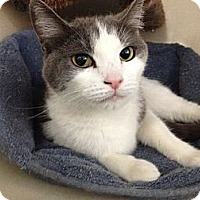 Adopt A Pet :: Mina - Chandler, AZ