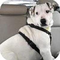 Adopt A Pet :: Baxter - justin, TX