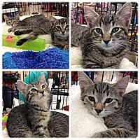 Adopt A Pet :: Rio,, Maui and Fij - Vero Beach, FL