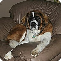Adopt A Pet :: Brandi - Dandridge, TN