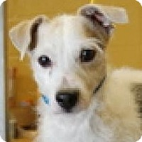 Adopt A Pet :: Jake - North Benton, OH