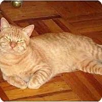 Adopt A Pet :: Garfield - Alexandria, VA