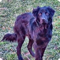 Adopt A Pet :: Beau - Greenville, SC