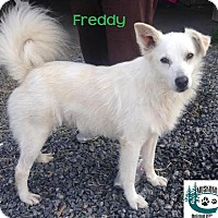 Adopt A Pet :: Freddy - Adopted  August2016 - Huntsville, ON