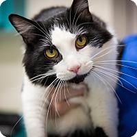 Adopt A Pet :: Max - Monroe, NC