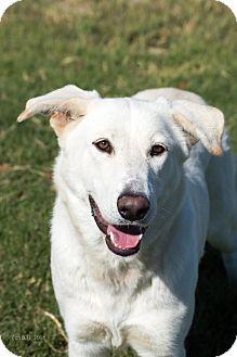 German Shepherd Dog Mix Dog for adoption in Walnut Creek, California - Ginny