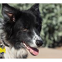 Adopt A Pet :: Mr. Jax - Tempe, AZ