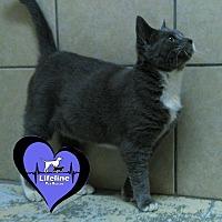 Adopt A Pet :: Henry - Huntsville, AL